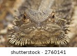 central bearded dragon   Shutterstock . vector #2760141
