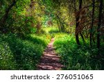 Path Through The Forest ...