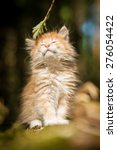 Stock photo adorable little red kitten with closed eyes 276054422