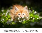 Stock photo little red kitten in flowers 276054425
