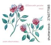 watercolor garden roses...   Shutterstock .eps vector #276077585