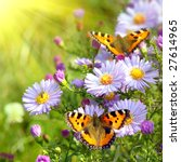 Stock photo two butterfly on flowers 27614965