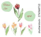 watercolor tulip illustration.... | Shutterstock .eps vector #276568712