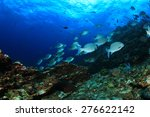 coral reef in sea and fish | Shutterstock . vector #276622142