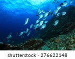 coral reef in sea and fish | Shutterstock . vector #276622148