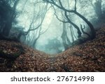 trail through a mysterious dark ... | Shutterstock . vector #276714998