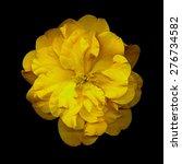 Closeup Of Yellow Camellia...