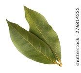 Bay Leaf Illustration