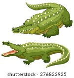 Two Green Crocodiles On White...