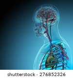 the human body  organs  by x... | Shutterstock . vector #276852326