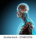 ������, ������: The human body organs