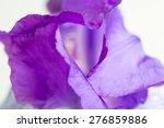 Purple Iris Flower Macro On A...
