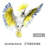 Crested Cockatoo. Vector...