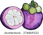 watercolor mangosteen. fresh... | Shutterstock .eps vector #276869222