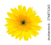 Yellow Gerbera Flower Isolated...