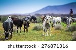 Goats  Pasturing On A Beautifu...
