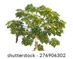 fresh papaya tree  with bunch... | Shutterstock . vector #276906302