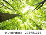 morning in the green forest at... | Shutterstock . vector #276951398