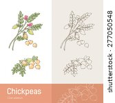hand drawn chickpeas with plant ... | Shutterstock .eps vector #277050548