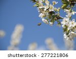 bee and flower | Shutterstock . vector #277221806