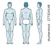 man body model. front  back and ...   Shutterstock . vector #277324148