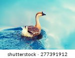 Goose Is Swimming In A Lake