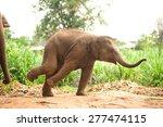 Stock photo asian elephant baby dance is joyfully 277474115