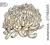 single chrysanthemum flower... | Shutterstock .eps vector #277582655