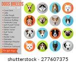 set of flat popular breeds of... | Shutterstock .eps vector #277607375