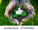 farmer hand holding a fresh... | Shutterstock . vector #277644062