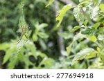 Spider In A Garden. Grenn And...