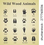 Set Of Wild Wood Animal Tracks