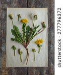 Dandelion's Herbarium
