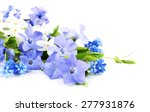 Purple Periwinkle Isolated On...
