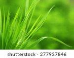 green grass on nature... | Shutterstock . vector #277937846
