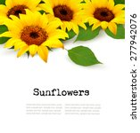 Sunflowers Background With...
