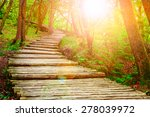 Summer Forest Pathway In...