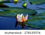 beautiful white flower water... | Shutterstock . vector #278135576