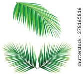 Coconut Leaf Vector