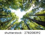 the forest above. surrounding... | Shutterstock . vector #278208392