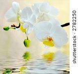 orchids | Shutterstock . vector #2782250