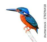beautiful colorful kingfisher... | Shutterstock . vector #278296418