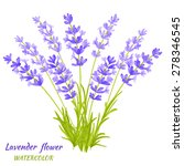 Vector Illustration Of Lavende...