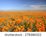 wild orange california poppy... | Shutterstock . vector #278386322