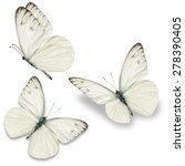 Stock photo three white butterfly isolated on white background 278390405