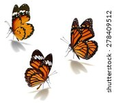 Stock photo three orange monarch butterfly isolated on white background 278409512