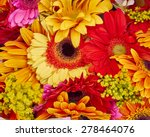 Colorful Gerber Daisies Close...