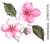 watercolor pink cherry sakura... | Shutterstock . vector #278472776