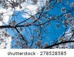 springtime sky framed by cherry ... | Shutterstock . vector #278528585