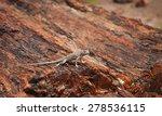 lizard on a petrified log ... | Shutterstock . vector #278536115